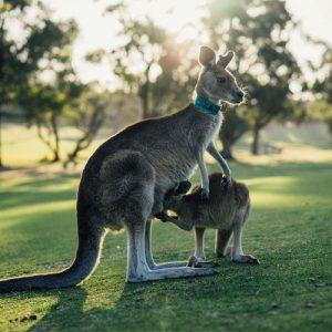 South Australia Adelaide Melbourne btn