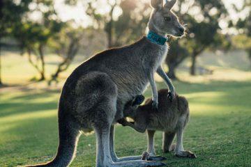 5D4N Adelaide & Kangaroo Island Experience Adelaide Melbourne btn