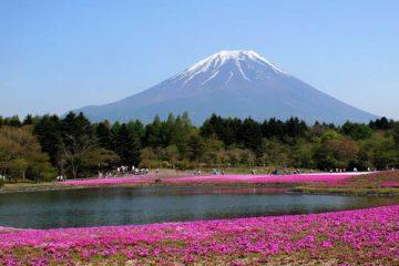 6D5N Tokyo, Mt. Fuji / Hakone & Kyoto Btn Mt.Fuji