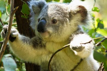 4D3N Gold Coast Wildlife & Adventure Gold Coast Wildlife btn