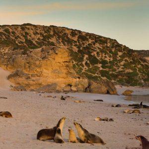 South Australia Kangaroo Island btn