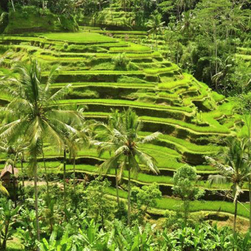 Muslim Packages TraditionalBali