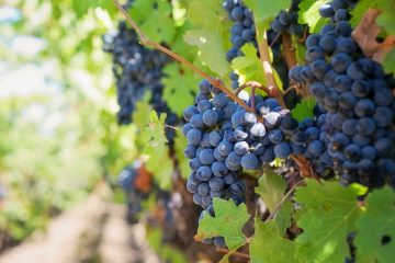 7D6N Vineyard And Kangaroo Island Escape Vineyard btn