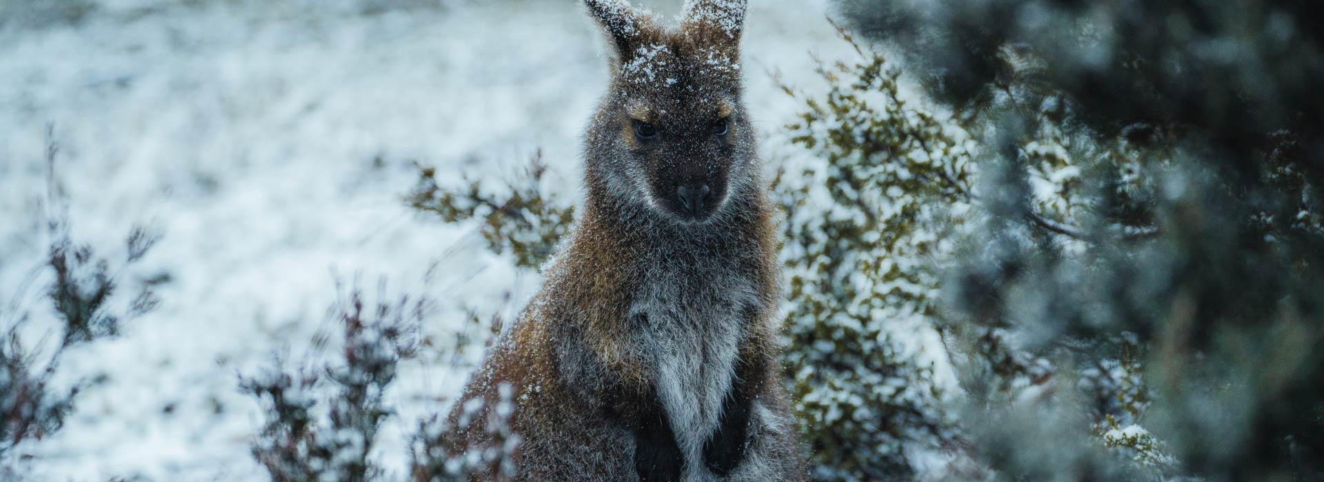 6D5N Wild Tasmania