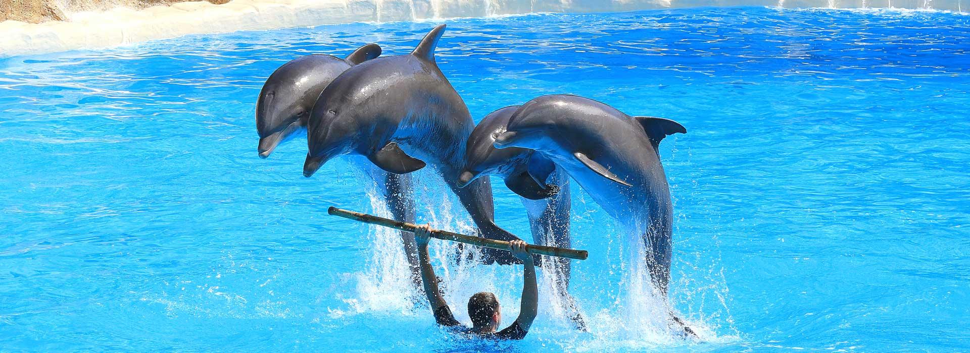 5D4N Dolphin Coast