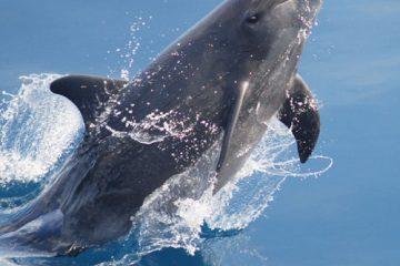 5D4N Dolphin Coast Perth4 btn