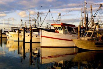 4D3N Launceston Free & Easy Tasmania2 btn