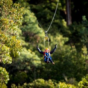Btn Hollybank Treetops Adventure